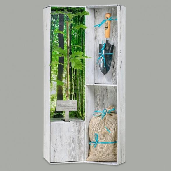 Podaruj Drzewko - Zestaw Premium
