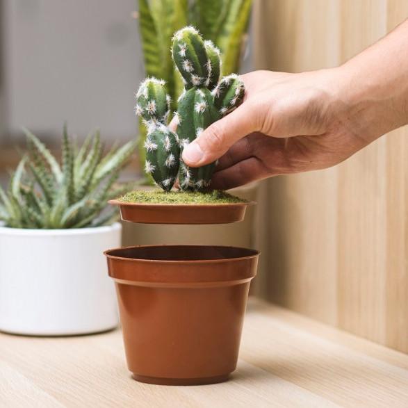 Kaktus Sejf