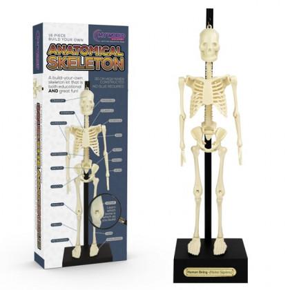 Szkielet Człowieka 30cm